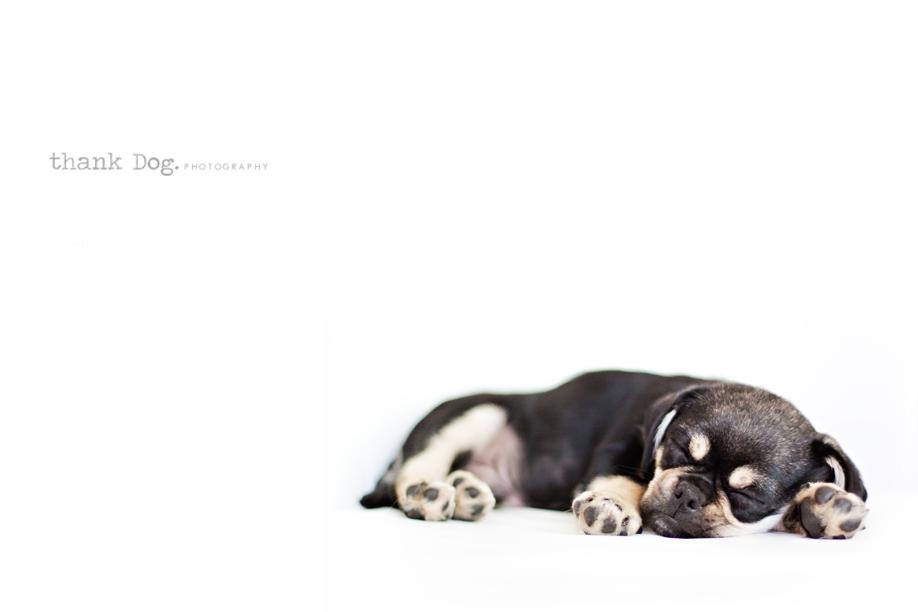 sleeping-on-white