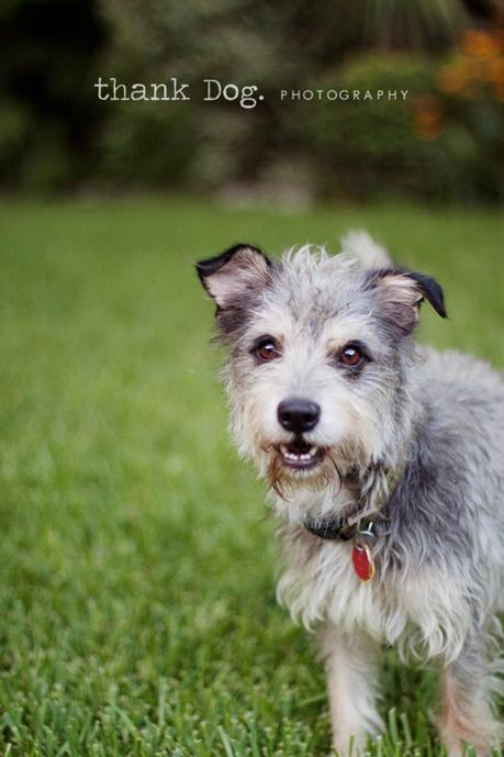 thank Dog. photography | dallas pet photography