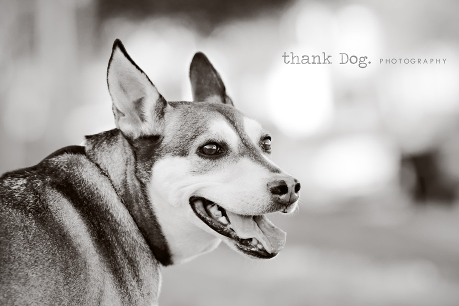 fun artistic modern dog photography   dallas tx