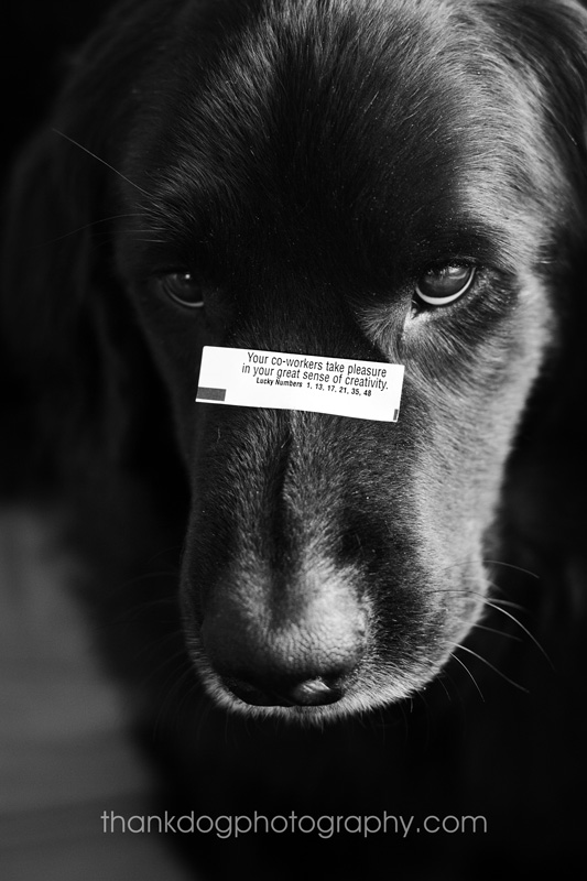 thank Dog photography