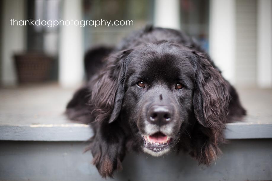 thank Dog photography | dallas dog photography