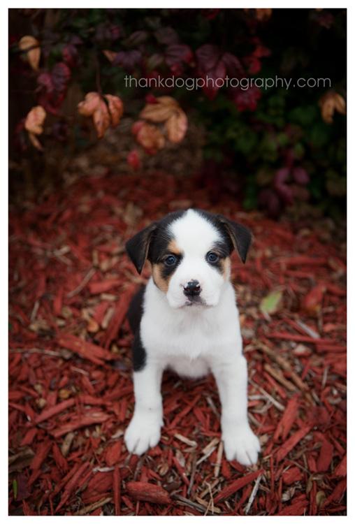DFW Rescue Me - Puppy
