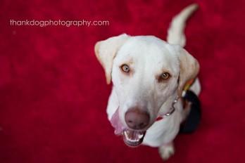 thank Dog. photography   Dallas, TX