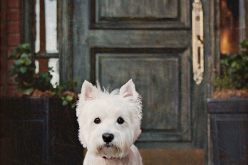 dog photography westie