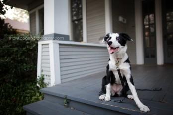 thank Dog. photography | dallas, tx